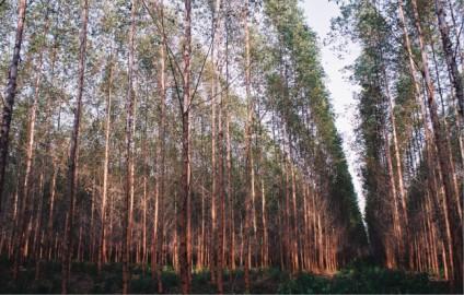Compro Reflorestamento
