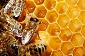 Compro Mel de abelha
