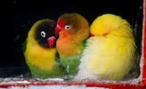 Compro Alimentos para aves