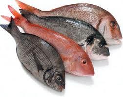 Compro Pescados