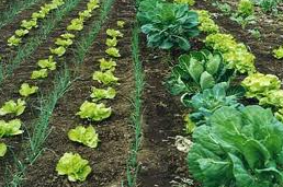 Compro Agricultura