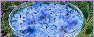 Compro Essências Florais