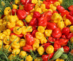 Compro Fresh Pepper