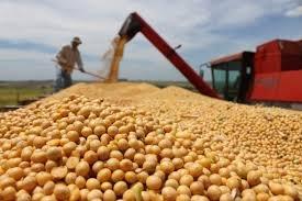 Comprar Soja e milho