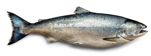 Compro Salmon fresco