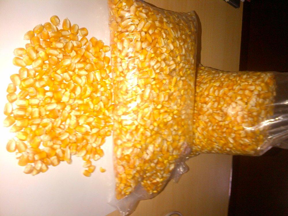Compro Maiz en Granos