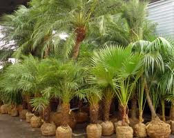 Compro Plantas ornamentais