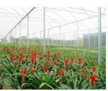 Compro Tricapa- linha de filmes Tricapa reúne o que há de mais avançado em tecnologia de filmes agrícolas.