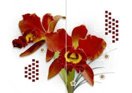 Compro Orquidea Vermelha