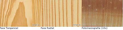 Compro Tabua Pinus Ocarpa (fôrmas)