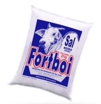 Fortboi