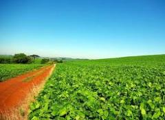 Produtos de agricultura