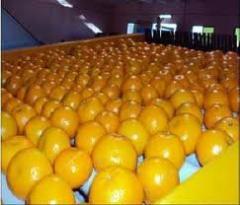 Frutas citrinas
