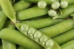 Feijão vegetal
