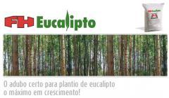 FH Eucalipto