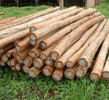 Madeira de pinus e eucalipto