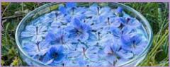 Essências Florais