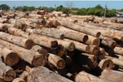Exportacao de produtos florestais