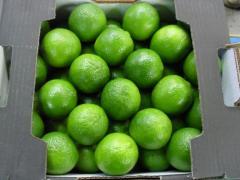 Limão Tahiti e Siciliano
