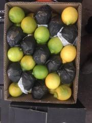 Limones Sicilianos