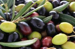 Azeites e Azeitonas espanholas