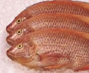 Peixe Saint Pierre ®