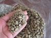 Feijão de café verde