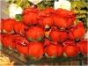 Flores artificiais brasileiras de Tipical aos
