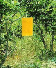 Armadilhas adesivas ecológicas para controle de