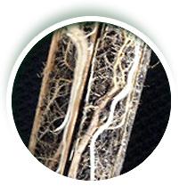 Fertilizante Basaplant Florestal