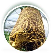 Fertilizante Basaplant Citros Sacola