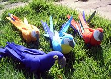 Aves brasileiras para evento, plush antialergico