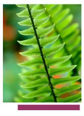 Plantas decorativos