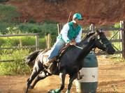 Cavalo Sunshine Doc JG