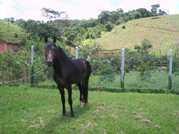 Cavalo Supremo do Morro de Capim