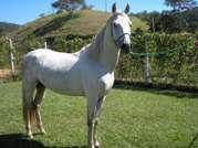Cavalo Luso da Gabiroba