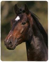Cavalo Arges Interagro