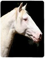 Cavalo Biscuit Interagro