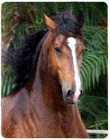 Cavalo Achiles Interagro