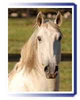 Cavalo Perdigueiro (MAC)