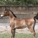 Cavalo Lumiar Lâmia