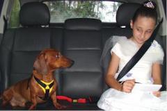 Cinto de Segurança para Cães PET LOCK