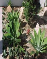 Jardim Cida de Itu