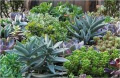 Plantas para ornamentação de jardins.