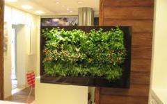 Plantas para canteiros indoor