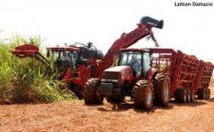 Máquinas agrícolas combinadas para cortar cana.
