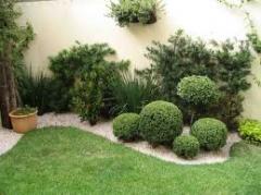 Mudas de árvores para ornamentação de Jardins.