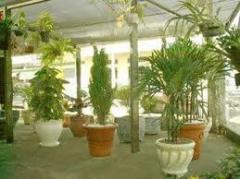 Plantas para decoração interna e externa
