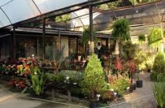 Plantas decorativas para áreas verdes.