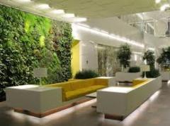 Plantas de jardins e outros ambientes.